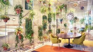 the best indoor plants for australian offices brisbane office plants
