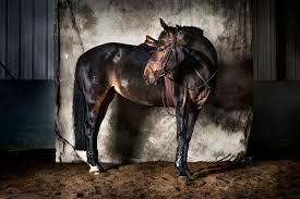 Performance <b>Horse</b> & Rider: <b>Quality Equestrian</b> Products & Apparel