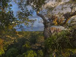 <b>Rainforest</b>   National Geographic Society