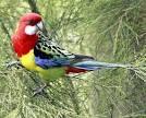 Kaka 2 parrots talking like humans in a way <?=substr(md5('https://encrypted-tbn1.gstatic.com/images?q=tbn:ANd9GcQABeUBV03se0xCiDbHMA-Mpbn7ift-HK9eMtwQIUrmfD53TpiViO0-22w'), 0, 7); ?>