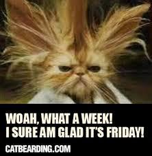 Memes Vault Friday Animal Memes via Relatably.com