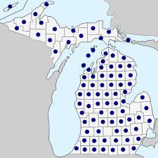 Rumex acetosella - Michigan Flora