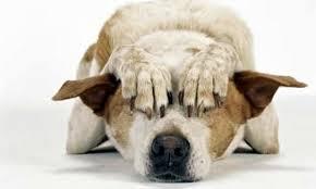 Resultado de imagen de perros