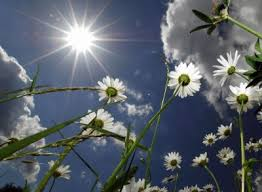 """Be like a flower and turn your face to the sun.""- Kahlil Gibran"