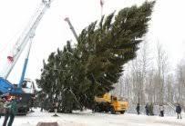 <b>Наша елка</b> едет в Кремль › Истринские ВСети