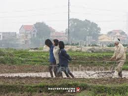 Image result for hình các cô gái cày ruộng theo trau
