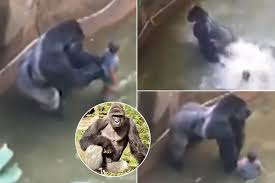 Image result for rip harambe