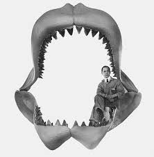 Image result for Megalodon sharks
