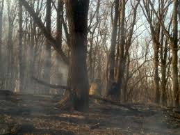 wildland or why i don t want to be a firefighter in california when engine 32 responded for smoke in the area i m sure that s what they were expecting it was surprising i m sure to out that the woods themselves