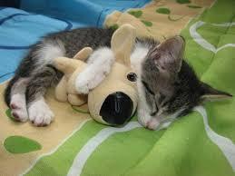 Картинки по запросу смешные животные спят