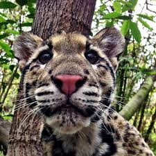Image result for leopard  cute