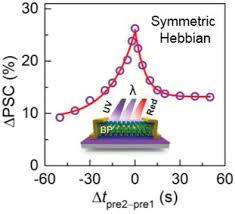Optically Stimulated <b>Artificial</b> Synapse Based on Layered <b>Black</b> ...