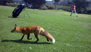 Image result for Sharp Park golf course picture