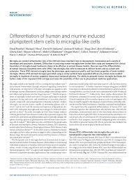 differentiation of human and murine induced pluripotent stem cells differentiation of human and murine induced pluripotent stem cells to microglia like cells