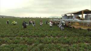 study immigrants don t take jobs from native born americans study immigrants don t take jobs from native born americans