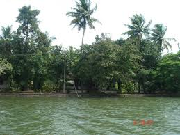 The great expanse of the Vembanad Lake along with <b>trees on the</b> ...