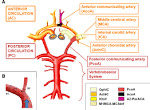communicating artery