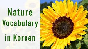 <b>Nature</b> (자연) Vocabulary In <b>Korean</b> - YouTube
