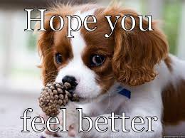 Image result for feel better soon puppy