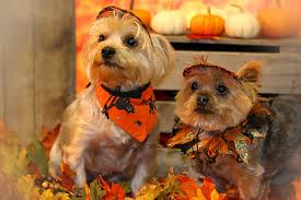 Image result for pets in fall