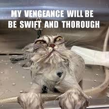 Top 20 Funniest Angry Cat Memes via Relatably.com
