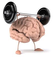 Image result for the brain