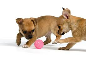 The 50 Best <b>Toys</b> for Puppies in 2020 - <b>Pet</b> Life Today