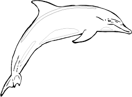 Small Picture Dolphin Coloring Sheets to Print shark coloring pages fish