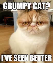 disdain cat memes | quickmeme via Relatably.com