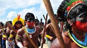 Resultado de imagem para nativos brasilis