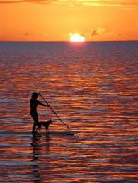 Image result for woman and dog paddle boarding