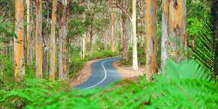 Image result for boranup forest