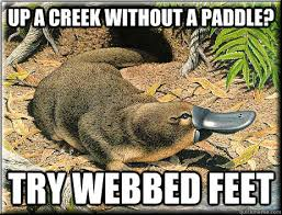 Up a creek without a paddle? Try webbed feet - Platitudinous ... via Relatably.com