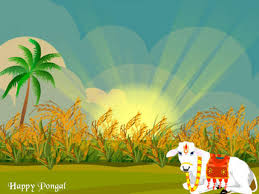 Image result for pongal festival images