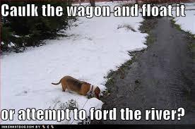 Puppy Driving - ImageFiltr via Relatably.com