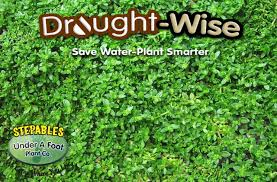 Herniaria glabra Green Carpet Rupturewort