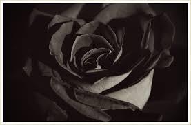 10 Types of <b>Black Flowers</b> - FTD.com