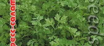 <b>Кресс</b>-<b>салат Весенний</b>, 0,5 г ‒ купить с доставкой в интернет ...