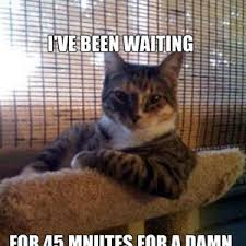 Impatient Cat by 76kevon - Meme Center via Relatably.com