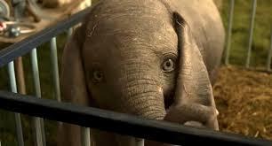Tim Burton's '<b>Dumbo</b>' Highlights Circus Cruelty | PETA