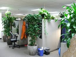 9 low maintenance plants for the office inhabitat green design innovation architecture green building charming office plants