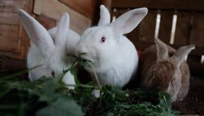 Hop to it!! Today is International Rabbit Day! - Edgar's Mission Farm ...