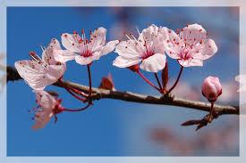 """Résultat de recherche d'images pour """"images de fleurs roses"""""""