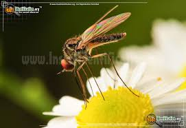 <b>Flying Insects</b>