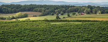 Home Page - Barren Ridge Vineyards | Winery, Wine Tasting ...