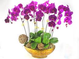 Kết quả hình ảnh cho hình ảnh hoa đẹp