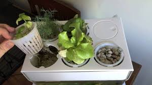 Aquafarm <b>2</b> Month Update Thanks to Back to the Roots <b>Water Garden</b>