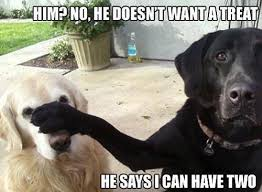 Most Funniest Dog Memes You Can't Stop Laughing | Just 4 Pet Care via Relatably.com
