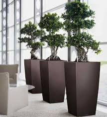 1000 images about office plants on pinterest office plants interior plants and house plants add bonsai office interior
