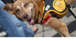 City Dogs Rescue & City Kitties, Washington <b>DC</b>
